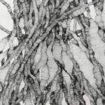 """Naym BEN AMARA, """"Condensation de champ de possibles"""" #2, 2019-20. Encre sur papier, 49×38,5 cm.Detail."""